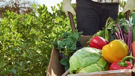 Avantaje si dezavantaje pentru agricultura conventionala